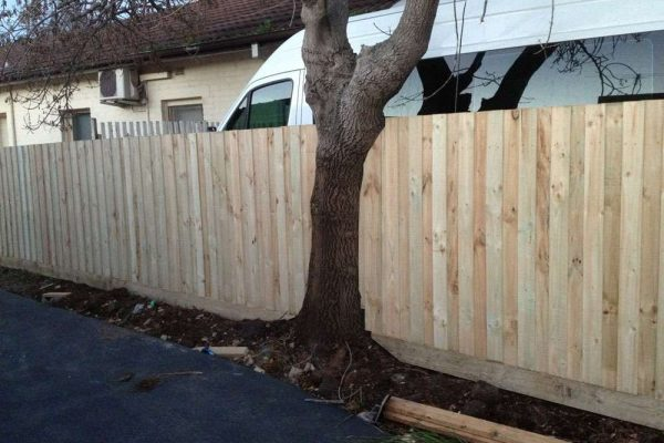 Treated Pine Paling with a Tree on Fence Line