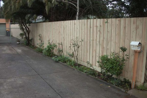 Treated Pine Paling fence